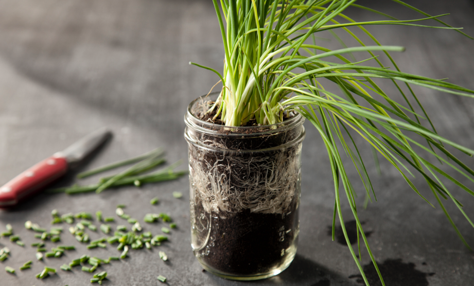 What's in Season: Chives