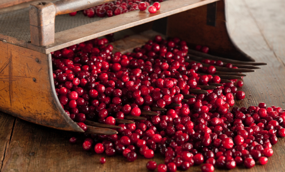 What's in Season: Cranberries